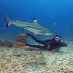 Beautiful blacktip shark in Morotai Island